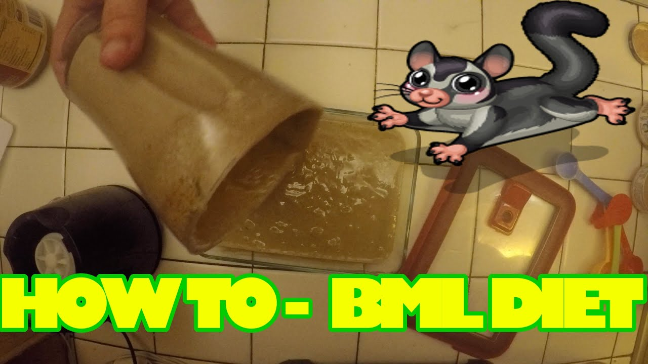 HOW TO: Make Sugar Glider Food - BML DIET - YouTube