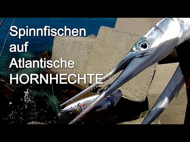 Spinnfischen Hornhechte Kanarische Inseln - Spinning Needlefish Garfish Canary Islands