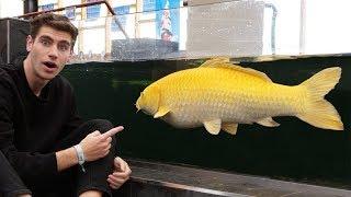Este pez cuesta $15,000 dólares