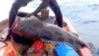 CAUGHT A MONSTER GOLIATH GROUPER EVER !! RED GROUPERS