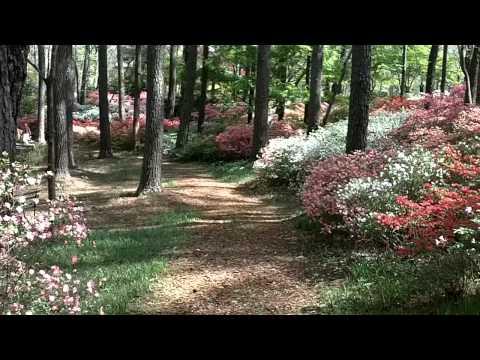 Callaway Gardens, Pine Mountain, Georgia