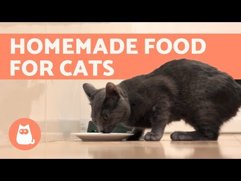 How To Cook Fish For Cats - Homemade Cat Treats