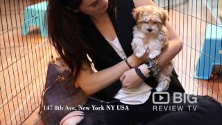 Citipups Chelsea, a Pet Shop in New York selling Puppies and offers Dog Boarding