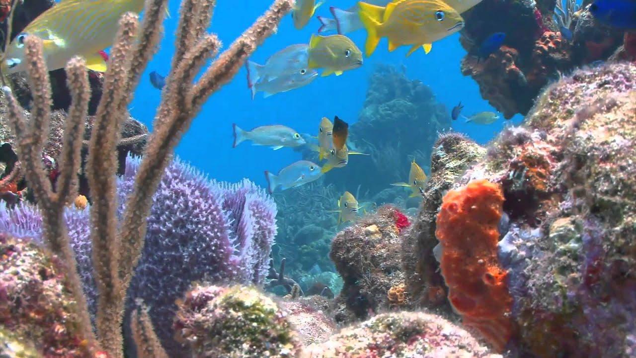 Dream walking on the ocean floor youtube for Ocean s floor
