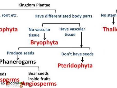 Biology - Plant Kingdom - Diversity in Living Organisms - Part 5 - English