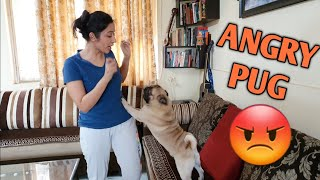 My PUG got very angry with me when I did this...