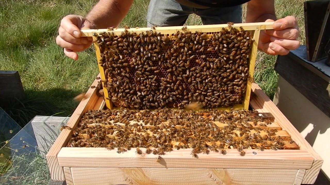 Stormachtige Groei Nederlandse Bijenhoudersvereniging
