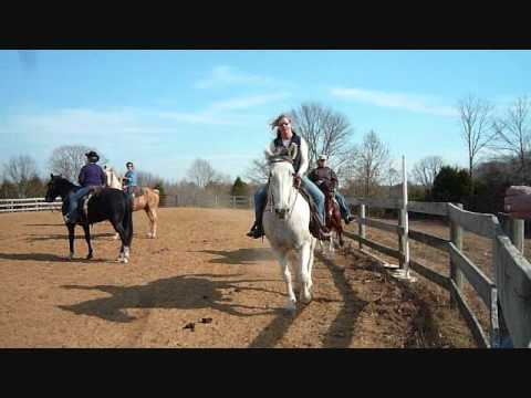 gaited horse clinic by Pam Burk