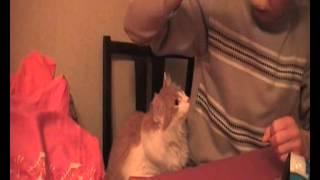 Cat Fetish