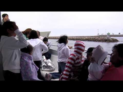 On The Go: Harbor Tours 2010