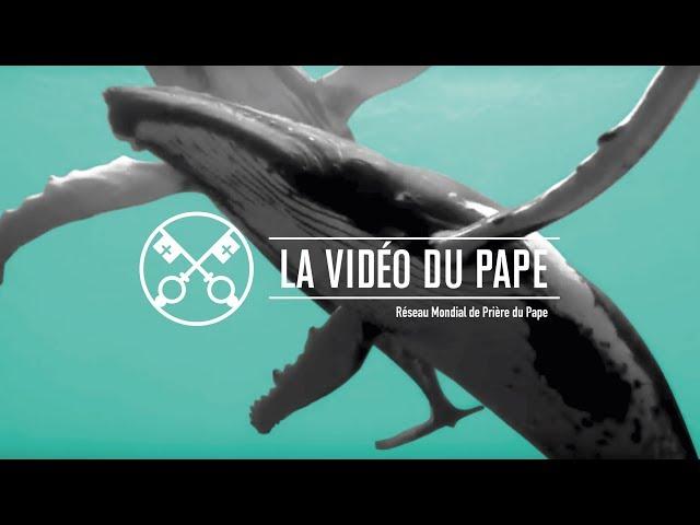 Protéger les océans – La Vidéo du Pape 9 - Septembre 2019