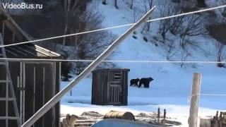 Русская женщина на медведя