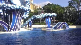 Америка. Флорида. Шоу с участием дельфинов. SeaWorld
