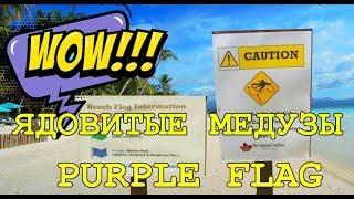 Малайзия: Осторожно, Ядовитые Медузы Убийцы! Purple Flag Beach Jellyfish Zone. Мини Глубокие Бикини