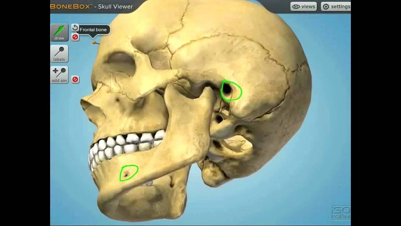 INTERACTIVE - BoneBox™ Skull Viewer: Anatomy App - YouTube