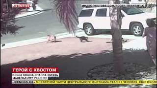 приколы кошки смешные топ видео 2014 животные кошки 17