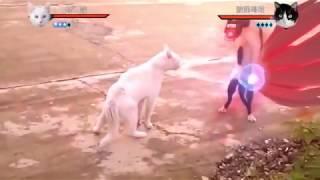 Pets love || Funny animals || Khi meo hóa thân vào Naruto