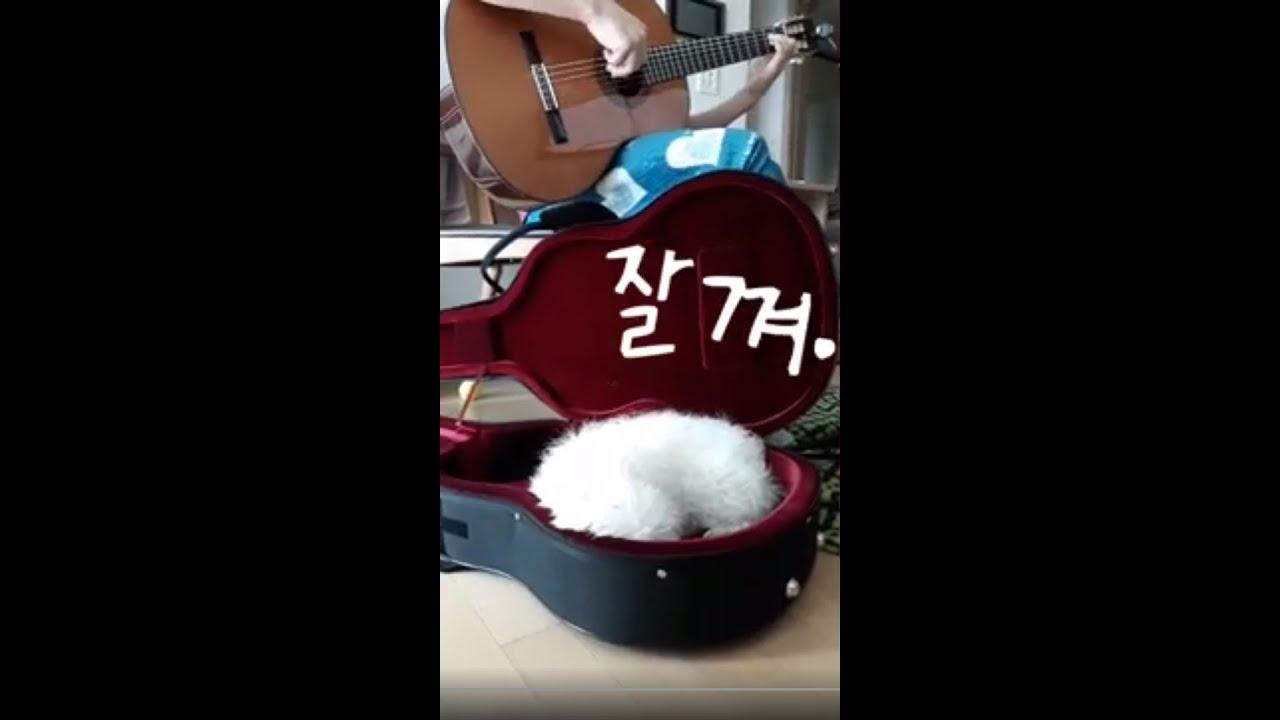 [개랑이] 기타만 치면 졸린 말티즈/sleeping dog in guitar case