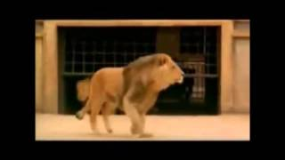Persecuzioni - Cristiani in pasto ai leoni - Throwing Christians to the Lions