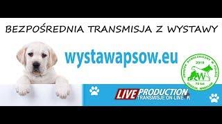 XXVI Międzynarodowa Wystawa Psów Rasowych - Wrocław 2018 - sobota