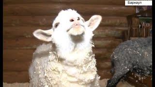 Новый закон о защите прав животных начал действовать в России