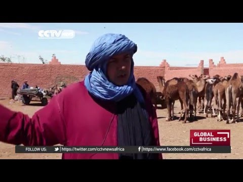 Popular market in Morocco specializes in camels and camel products