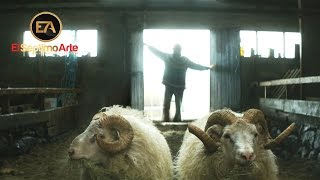 'Rams (El valle de los carneros)' - Tráiler español (VOSE - HD)