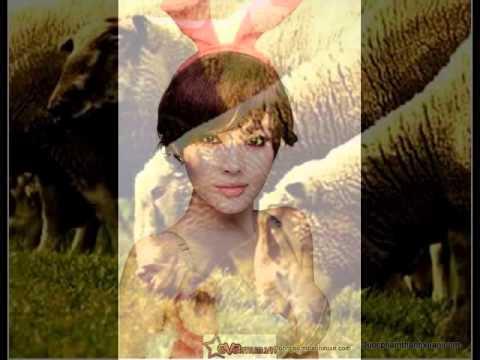 Viên uống nở ngực - Nhau Thai Cừu Queen 9 -- Dược Phẩm Thanh Xuân