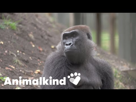 Surgeon operates on a very unlikely patient | Animalkind