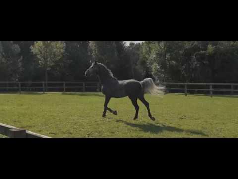 Luxury equestrian real estate - luxus reitanlagen- luxe paardenaccomodaties