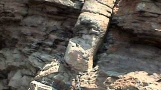 Polystrate Fossils -- evidence against millions of years by CMIcreationstation