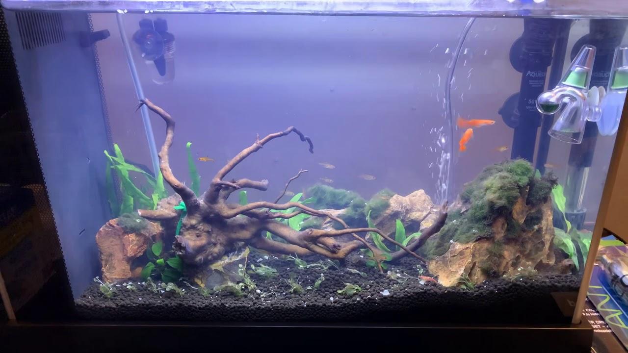 New 5 Gallon Freshwater Aquascape!! - YouTube