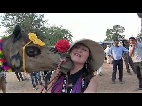ऊँट ने चुम्मा दिया गोरी मेम को  Camel Kissing Foreign Tourist Woman , Rajasthan , India Tourism