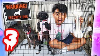Escape The Dog Cage Challenge Part 3!