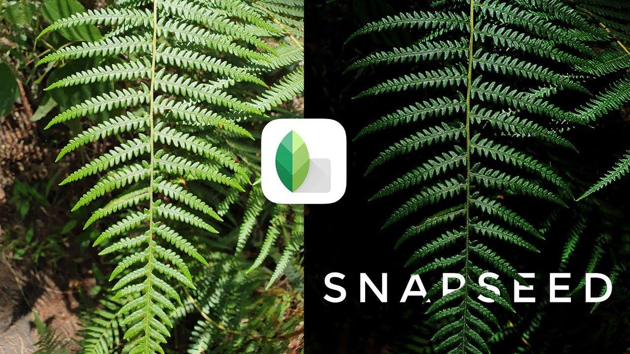 Chỉnh ảnh lá cây kiểu Low Key bằng Snapseed đơn giản