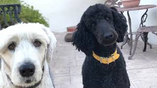 Newport Beach dogs want a dog park