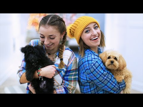 Puppies Make Everything Better! | 12 Days of Vlogmas {Day 4} | Brooklyn and Bailey
