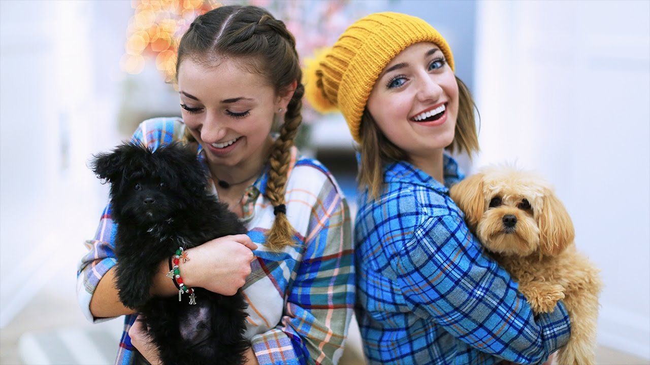 puppies make everything better!   12 days of vlogmas {day 4
