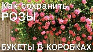 Розы в коробке  - как сохранить розы (buketberry ru)(Buketberry – это букеты на заказ, с бесплатной доставкой по Москве круглосуточно. Заказ онлайн на сайте http://buketber..., 2016-04-15T08:21:51.000Z)