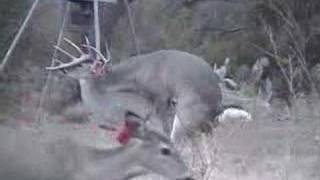 Repeat youtube video Deer90210