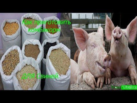 Состав корма для свиней в домашних условиях