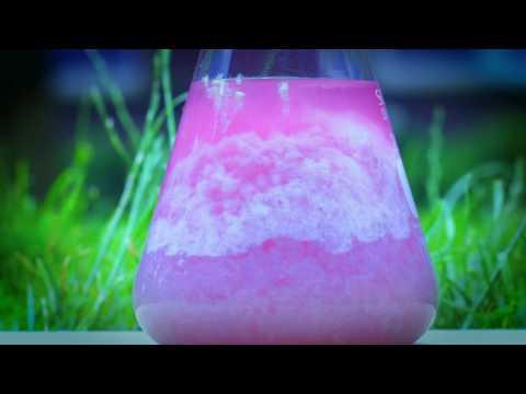 Visualizing The Kinetics Of Calcium Carbonate Precipitation