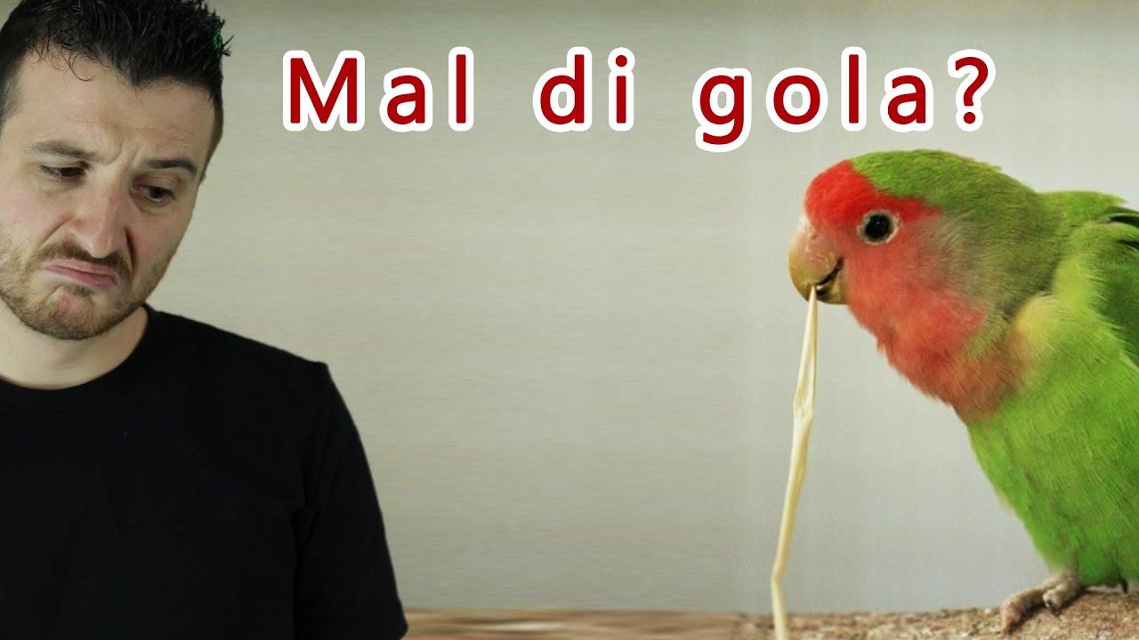 Mal Di Gola - Influenza e raffreddore - Farmaci da banco ...
