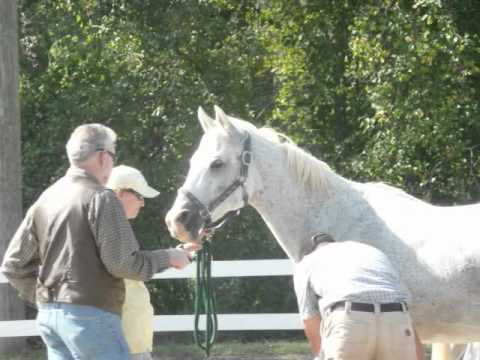 Biltmore Fall Fling 2010 Endurance Ride