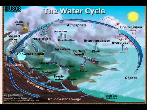 water and carbon cycle