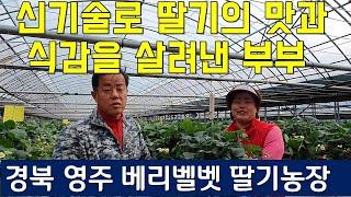 CO2강화재배기술로 딸기의 맛과 식감을 살려낸 부부_영주 베리벨벳 딸기농원, 이산화탄소는 왜 필요했나? 딸기농장의 수정벌의 차이점