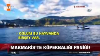 Marmaris'te köpekbalığı paniği! - 21.06.2015 - atv