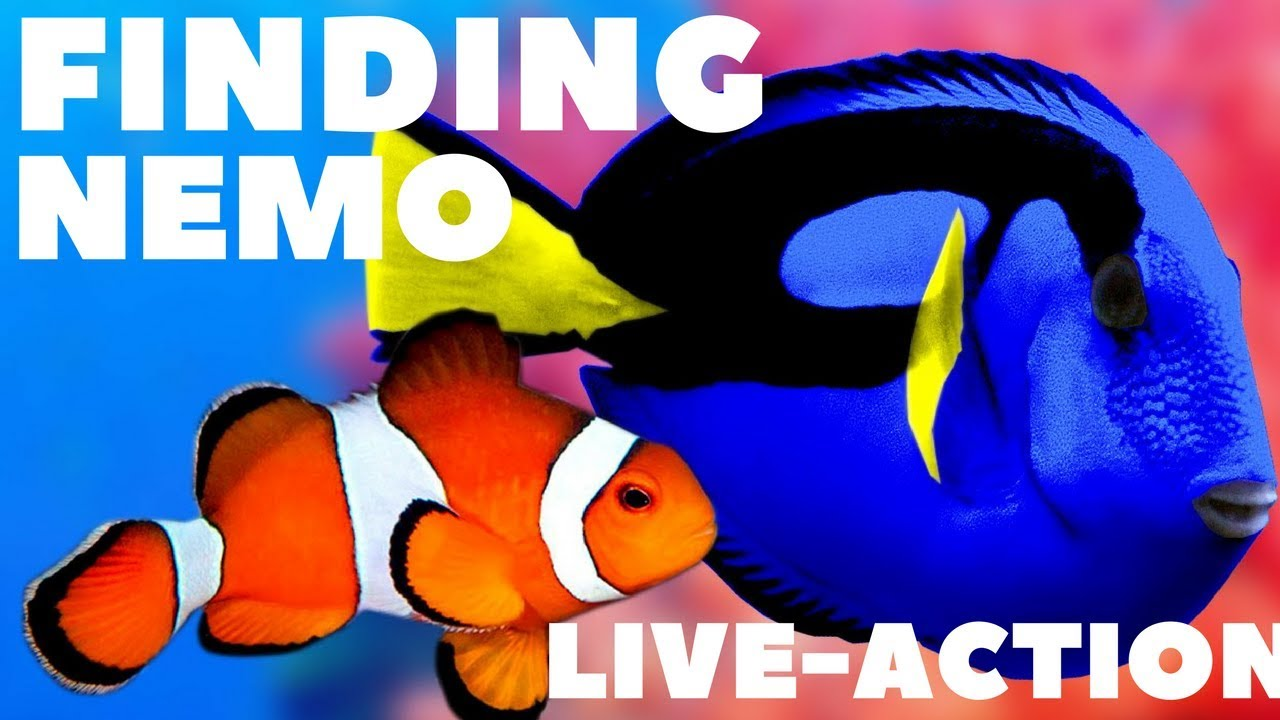 Download Finding Nemo live-action trailer | 2019