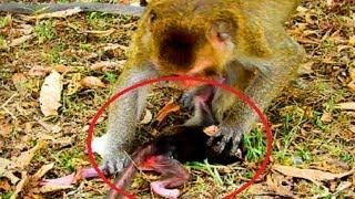 Very pity baby   Why mum angry mum like this  Mum maltreat new baby so much