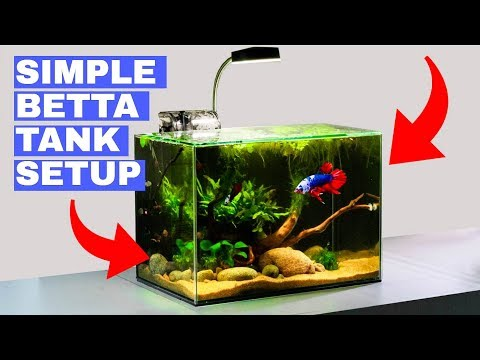 Building A Simple Betta Tank: TUTORIAL